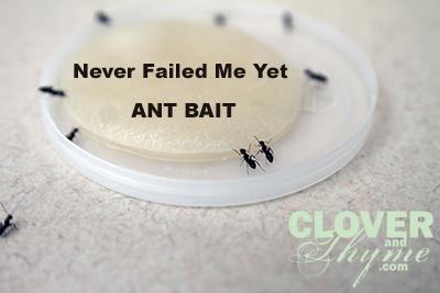 Homemade Ant Bait Hometalk