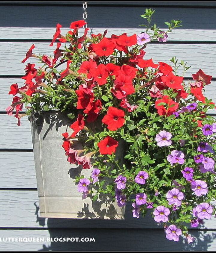 My hanging baskets are planted in galvanized pails.  I have put holes in the bottoms.