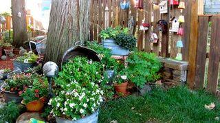 q landscaping questions, gardening, landscape