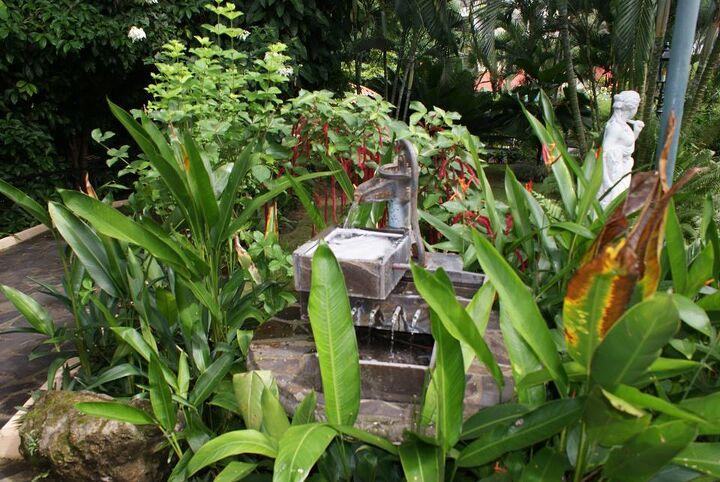 new pics 6 1 14, gardening, landscape