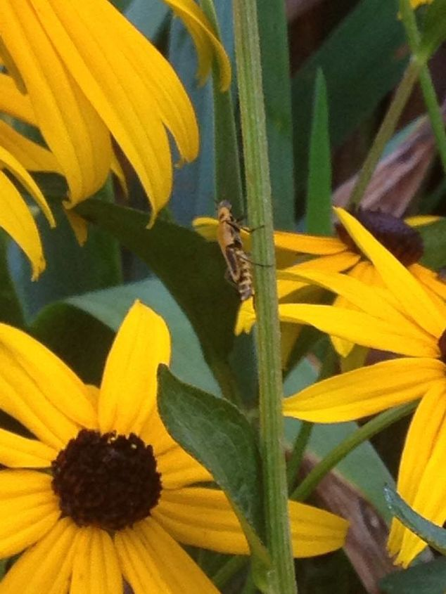 new bug, gardening