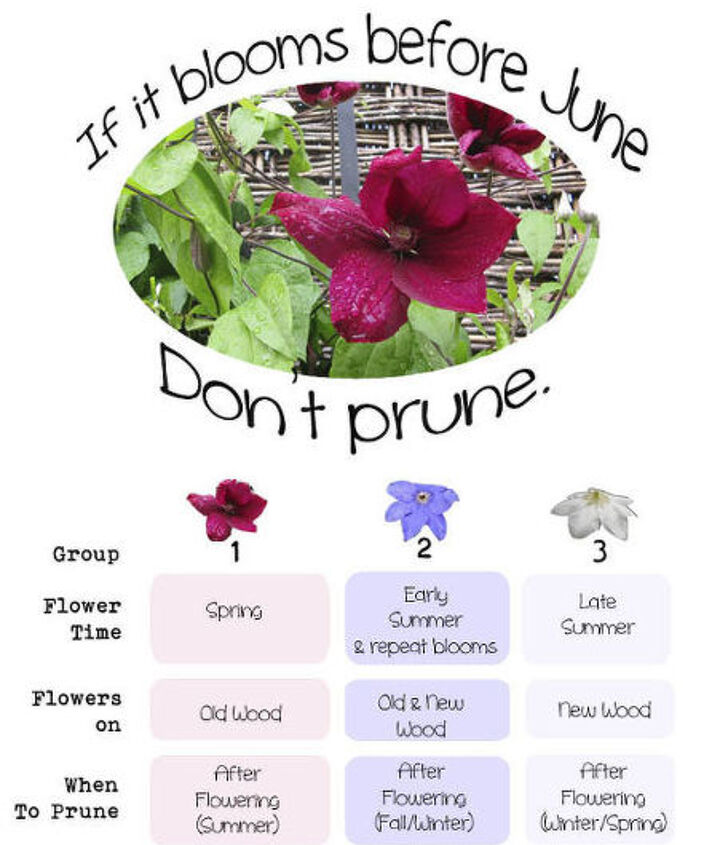 grow clematis for a gorgeous burst of colour, flowers, gardening, If you have a clematis but don t know what type it is this guide may help with pruning decisions