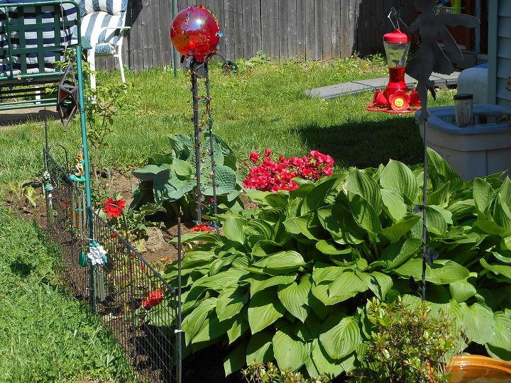 developing a red garden around long standing hosta, gardening, landscape
