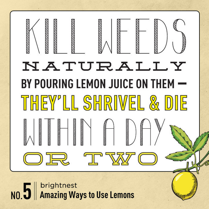 power to the lemon 10 amazing household tips, cleaning tips, go green