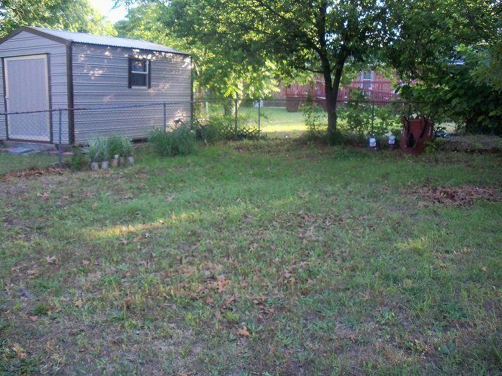 weeds, minimal grass