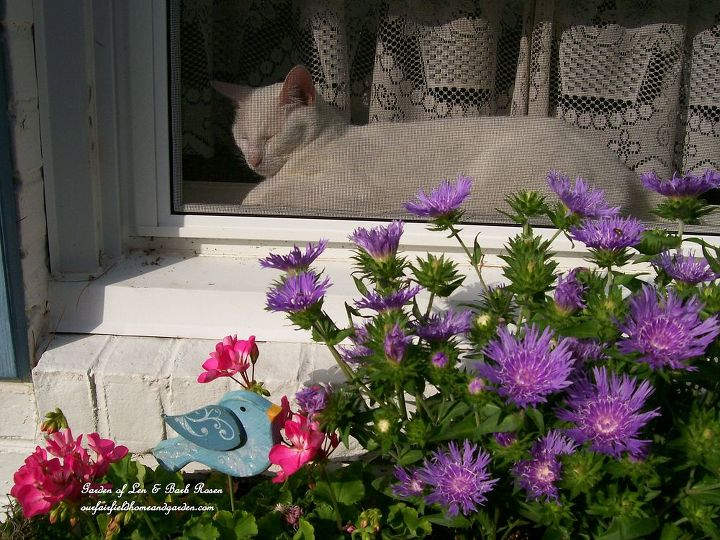 window seat, flowers, gardening, pets animals, Our Shadow enjoying the sun and the flowers Garden of Len Barb Rosen