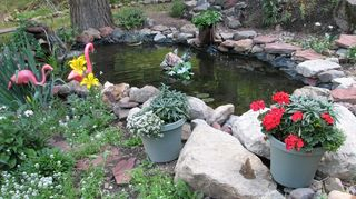 q can anyone give me some good reasons to get a pond just asking, ponds water features