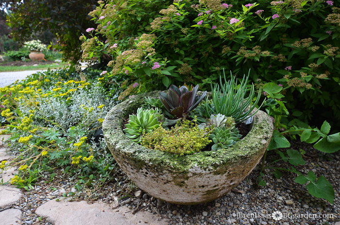 Succulent container in the corner of my large landscape.