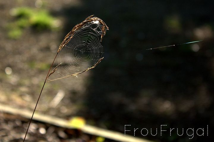 Spider web in the weed