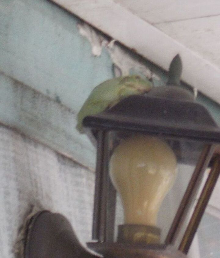 good thing I didn't use the outside light while he was up there!