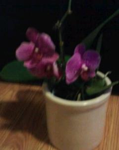 my orchids, gardening