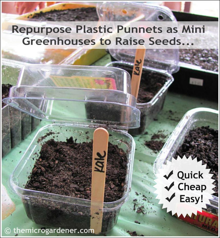 seed starting guide quick tips for starting seeds successfully, container gardening, gardening