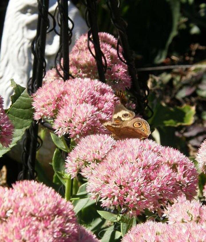 the bee attraction, gardening