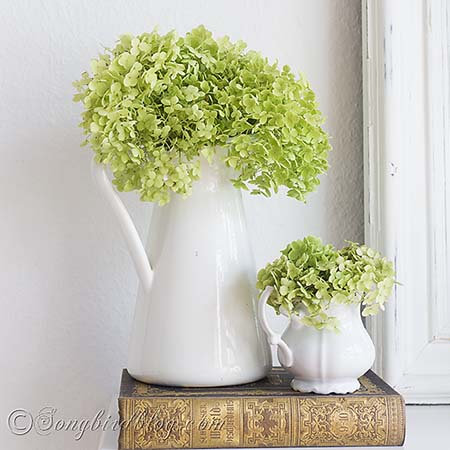 Hydrangea Annabelle doesn't need much to be the star of any decoration.