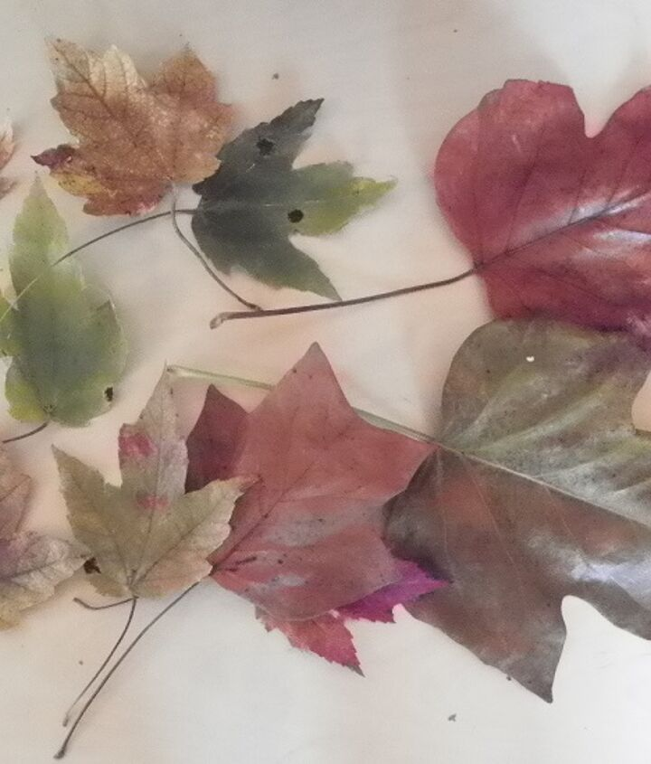First I went out into my Yard and Collected some Leaves in Different Shapes, sizes and colors....
