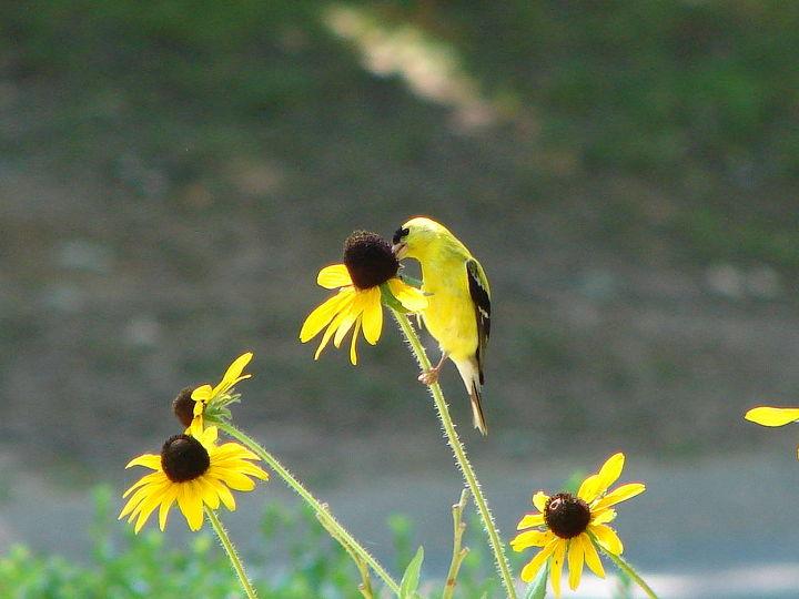 attracting the birds, gardening, wildlife animals, Taken next to my mailbox