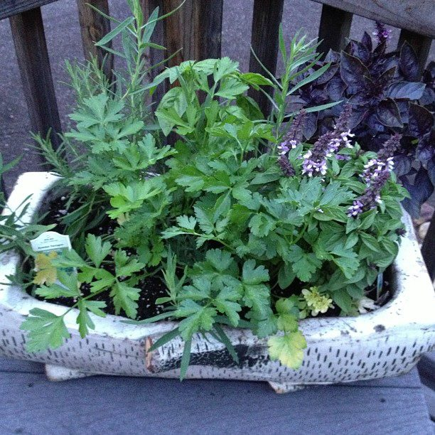 Small herb planter on my deck. It's really healthy and so convenient for cooking.
