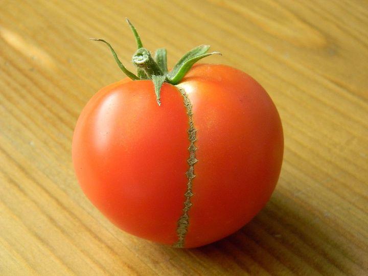 tomato butt