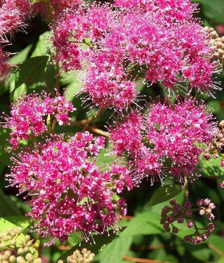 flowers finally blooming in my garden, flowers, gardening