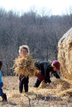 create an instant garden with sheet mulching, gardening, homesteading, landscape