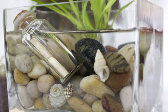 This is an 'aqua-terrarium' It's soil-less with just water and stones http://www.sowanddipity.com/green-gift-idea/