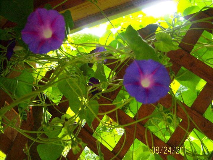 my clips, gardening