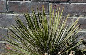 if salt kills weeds, gardening
