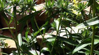 q plant identification, flowers, gardening