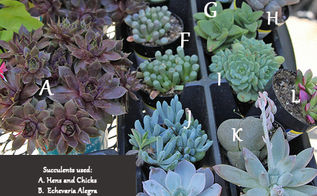 how to create a succulent monogram wreath, flowers, gardening, succulents, A listing of the succulents that I used for this project