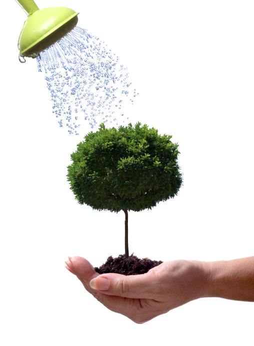 how to transplant trees from one place to another, gardening, landscape