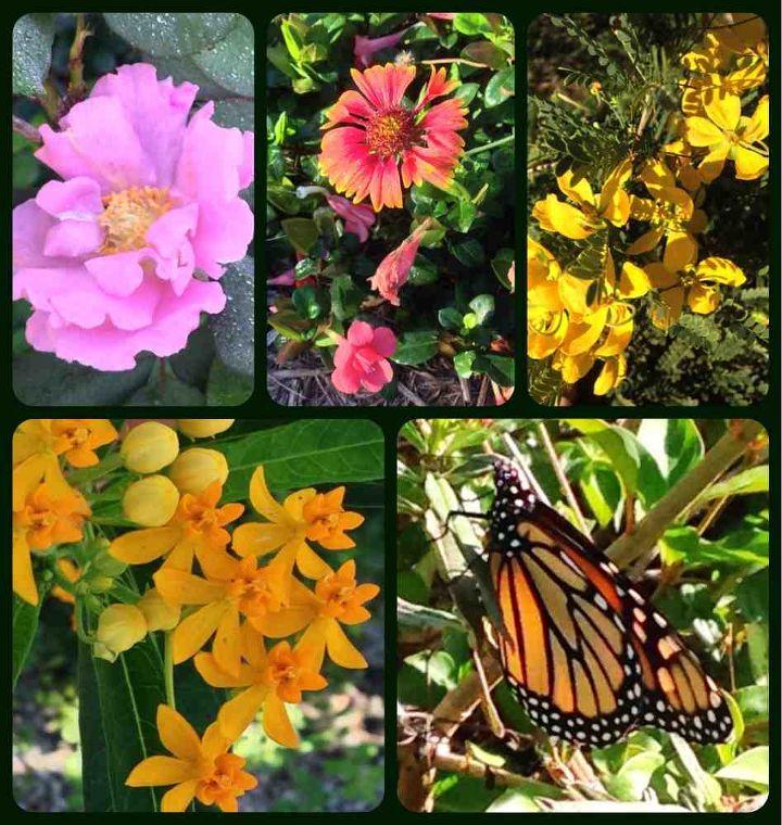 december in sw florida, gardening