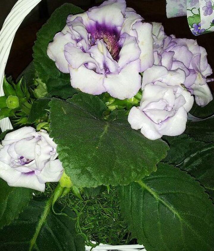 name of flower, flowers, gardening