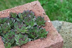 Hypertufta planters are a very affordable concrete garden project.