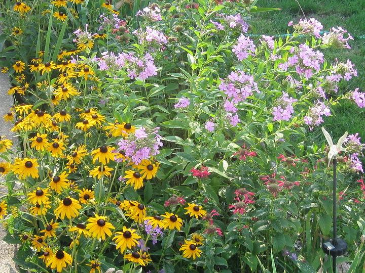 more flowers from garden, flowers, gardening, hibiscus