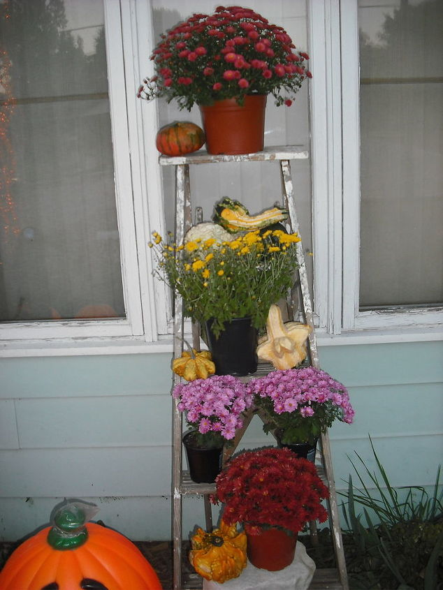 Mums on ladder and gourds