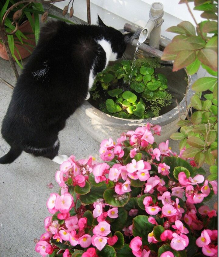 My cat thinks the little water feature is her drinking fountain!