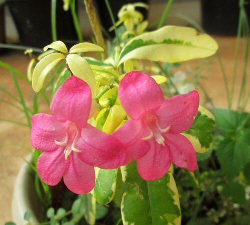 Plant identification hometalk mightylinksfo