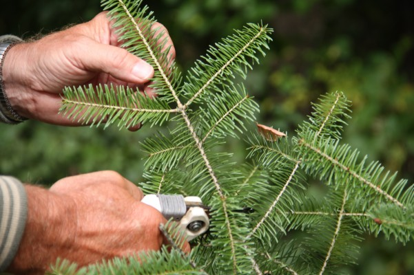 We also used balsam for the evergreen scent.