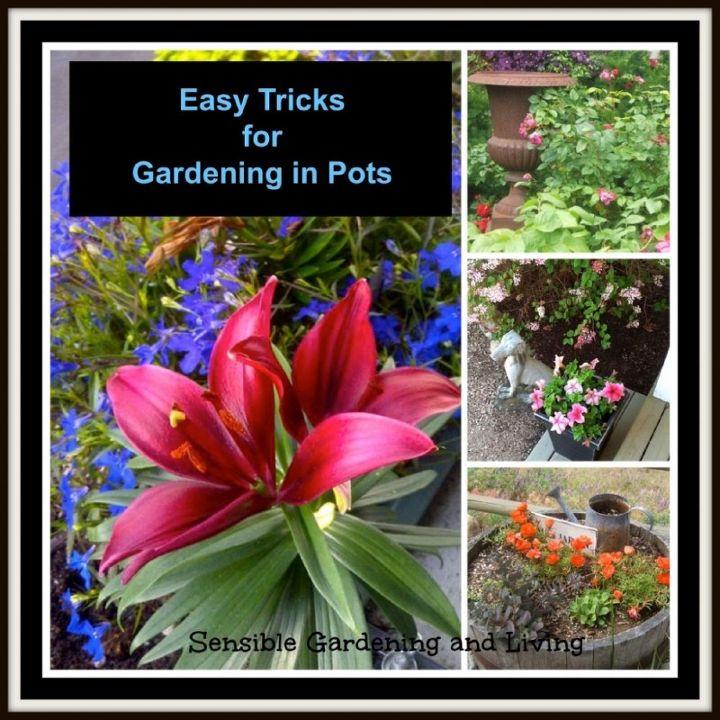 easy tricks for gardening in pots, container gardening, flowers, gardening, perennials, Ways to make gardening in pots a little easier