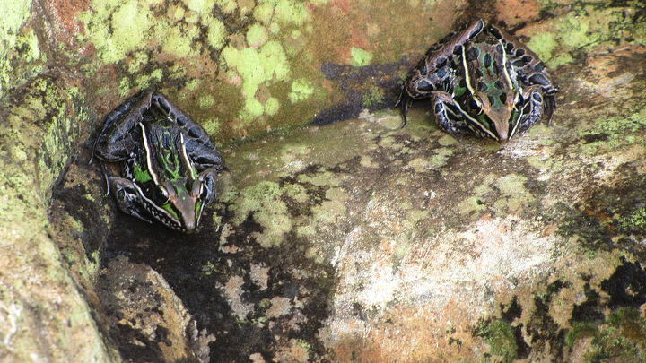 Large waterfeature for frogs
