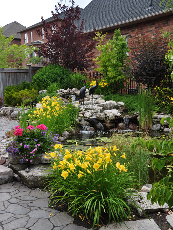 Though this pond looks expansive, this is actually a modest sized suburban backyard.