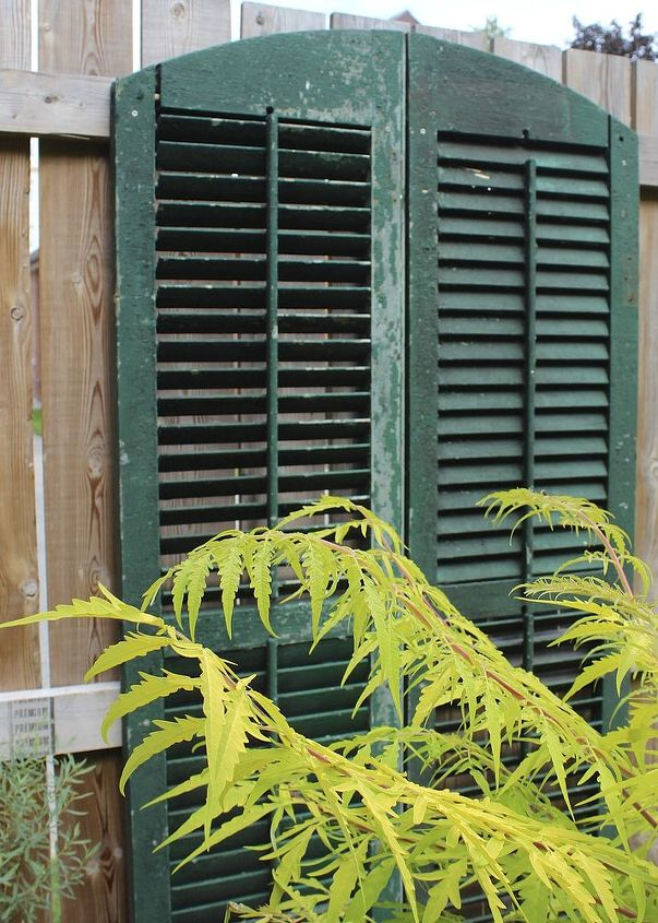 You could paint them any colour you want, but we left the original green to show off the plants like this Tigers Eye sumac.