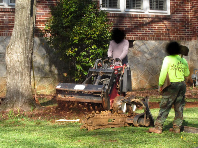 great way to kill a tree, landscape, outdoor living, The crew running the tiller right around the large maple tree