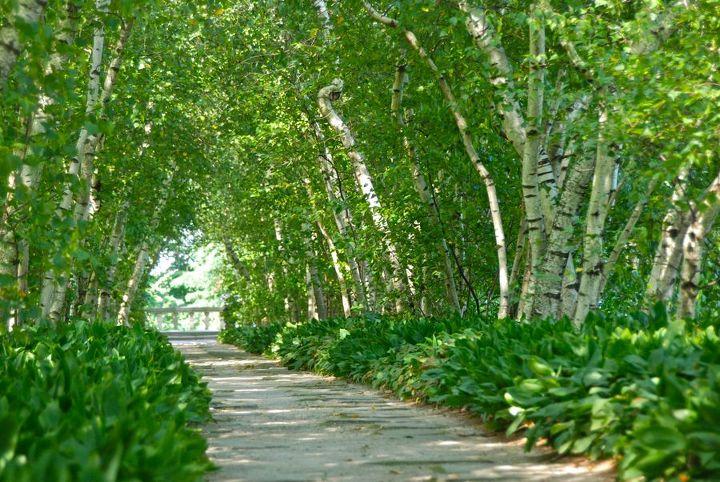 Birch Allee at Stan Hywet Hall & Gardens, Ohio | Hometalk
