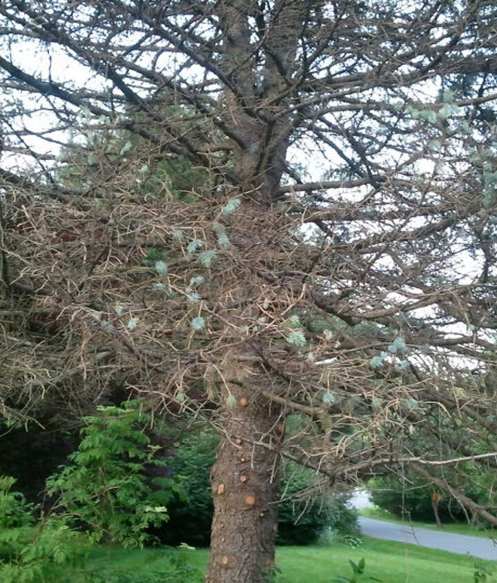 does anyone know what s wrong with this tree, gardening