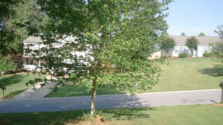 have a maple tree our builder planted 12 years ago which is leaning any, landscape, 20 foot tree