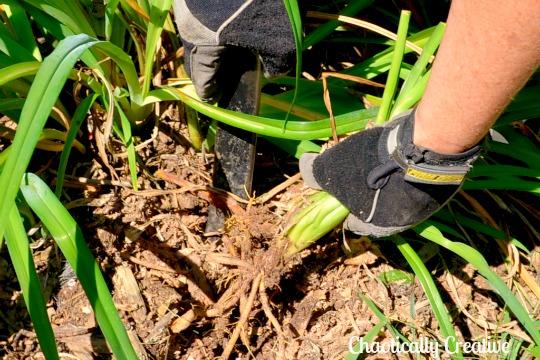 the weeding wonder tool, gardening, tools