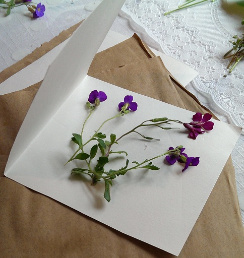 2/Prepare your flowers and fold them into some absorbent paper