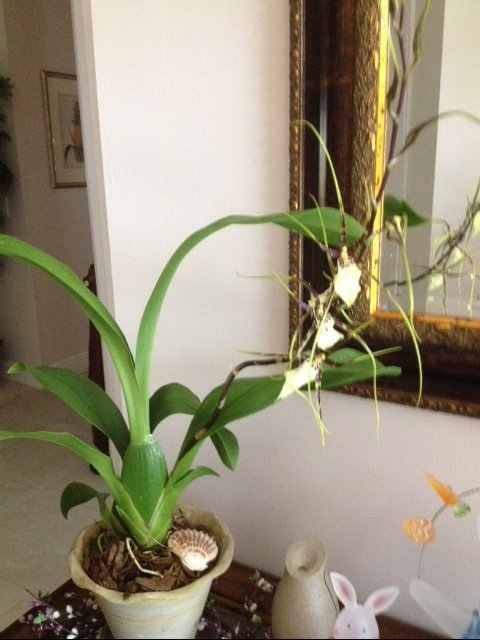 my unusual orchid, gardening, landscape