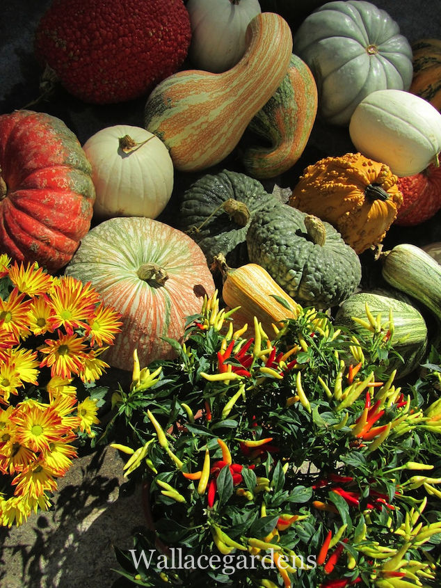 tgif thank god it s fall y all, container gardening, flowers, gardening, seasonal holiday d cor, The inventory